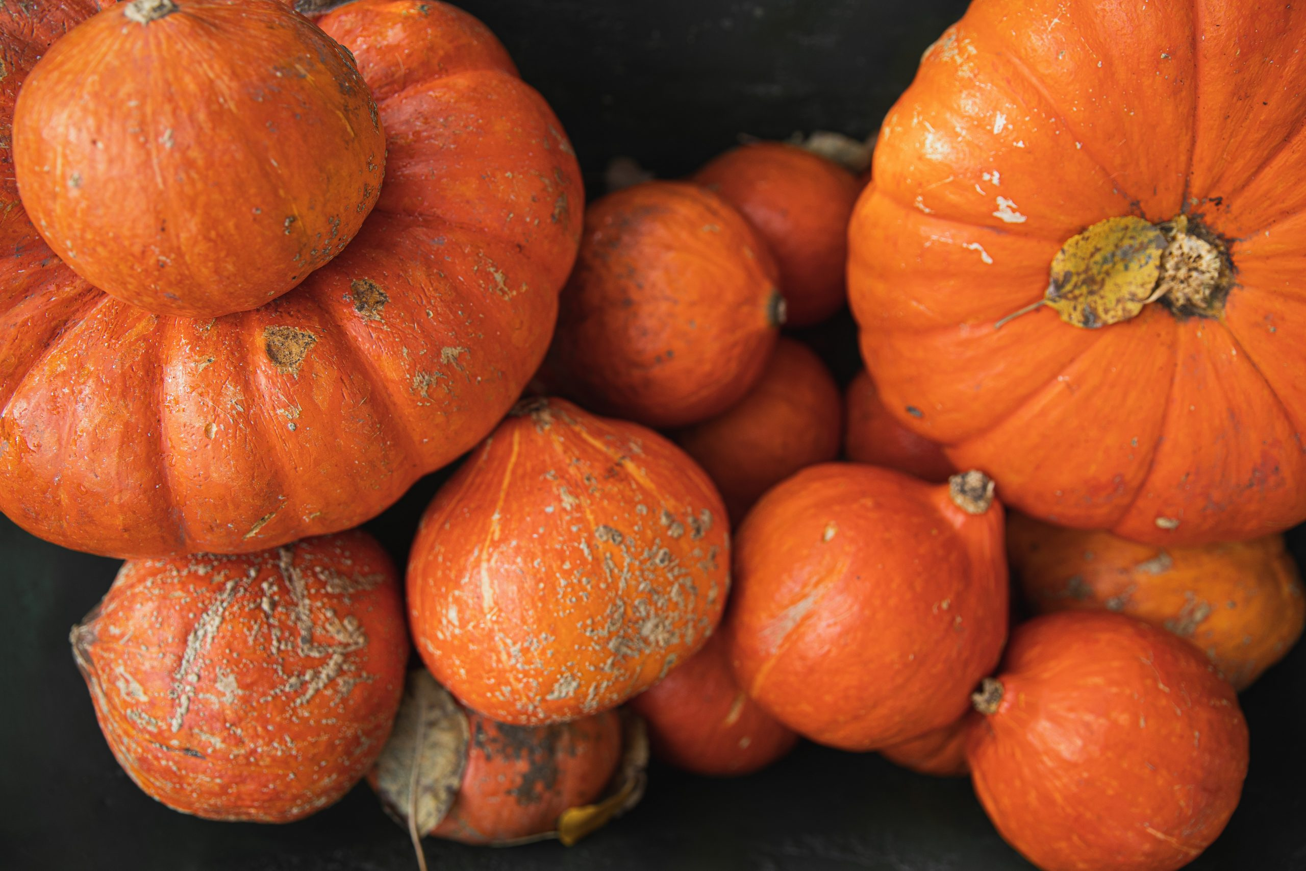 Comfort food d'autunno: le novità del mese dell'Enoteca Longo